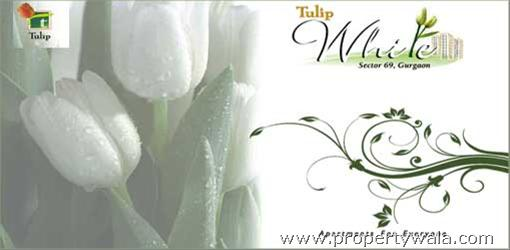 Tulip White - Sector-69, Gurgaon