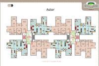 Aster-Floor Plan