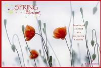 3 Bedroom Flat for sale in Spring Bloom, Ghorpadi, Pune