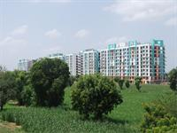 Panormic View