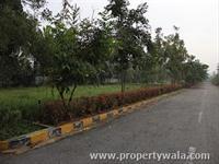 Avenue Plantation