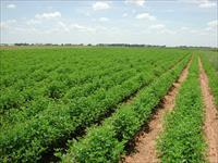 Agricultural Plot / Land for sale in Sohna Road area, Palwal