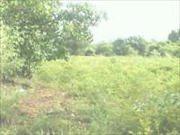 agriultural land for sale in roha - raigad