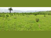 Agricultural Plot / Land for sale in Bhor, Pune