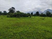 Agricultural Plot / Land for sale in Tokawade, Thane