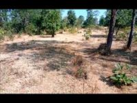 Agricultural Plot / Land for sale in Dahanu, Thane