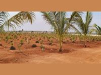 Agricultural Plot / Land for sale in Uppal, Hyderabad