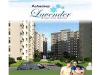 Ashadeep Lavender