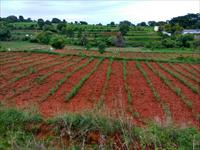 Agricultural Plot / Land for sale in Hosur, Bangalore