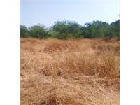 Agricultural Plot / Land for sale in Tala, Raigad