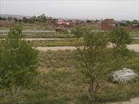 RESIDENTIAL PLOT IN YAQUB PUR NOIDA NCR