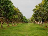 Agri Land for sale in Sriya Gardens, Kothavalasa, Visakhapatnam